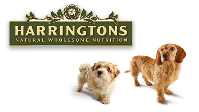 harringtons-tv-advert-voice